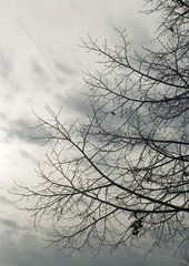 Bare branches and gray sky