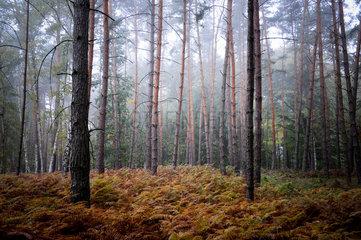 Zerpenschleuse  Deutschland  herbstlicher Mischwald mit Farnen