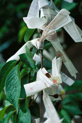 Omikuji papers tied to branches