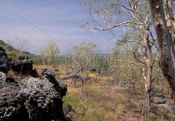 Australia  Northern Territory  Kakadu National Park