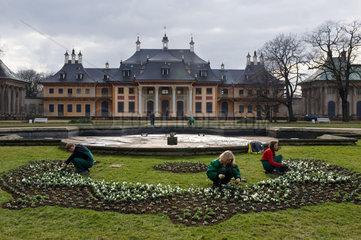Historisches Palmenhaus - Fertigstellung der Sanierung des mit 150 Jahren aeltestem Palmenhaus Deutschlands