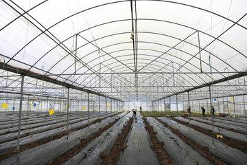 #CHINA-SPRING-FARM WORK (CN)