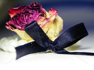 Rose with bow