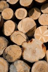 Heitersheim  Deutschland  gestapelte Baumstaemme