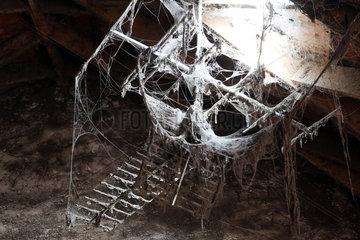 Guetersloh  Deutschland  in Spinnweben eingehuellte Fernsehantenne