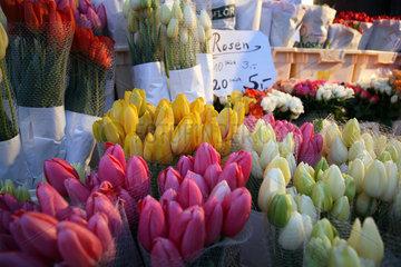 Berlin  Tulpen und Rosen im Strassenverkauf