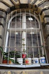 Budapest  Ungarn  Zimmerpflanzen stehen auf einem vergitterten Fensterbrett