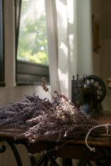 Jugenheim  Deutschland  getrocknteter Lavendel auf alter Naehmaschine