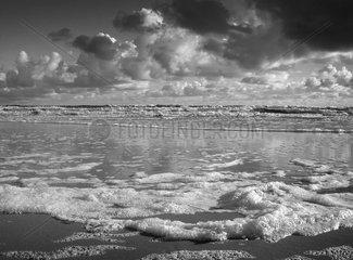 Schaumalge Schaumteppich Nordsee