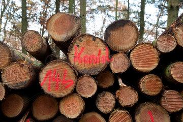 Trier  Deutschland  gestapelte Baumstaemme entlang des Wanderweges auf dem Eifelsteig
