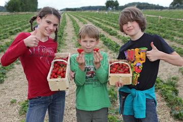 Werl  Deutschland  Jugendliche zeigen stolz ihre selbst gepflueckten Erdbeeren
