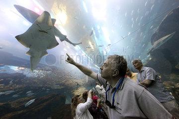 Dubai  Vereinigte Arabische Emirate  ein Mann zeigt auf einen Rochen im Dubai Aquarium