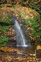 Trier  Deutschland  Wasserfall im Butzbachtal auf dem Eifelsteig