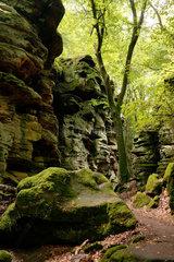 Ernzen  Deutschland  Felsbloecke in der Teufelsschlucht