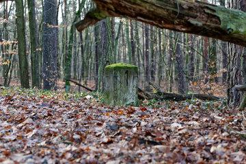 Berlin  Deutschland  Ueberreste Stahnsdorfer Friedhofsbahn