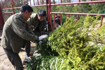 CHINA-GANSU-HUIXIAN-POVERTY ALLEVIATION-TREE NURSERY (CN)