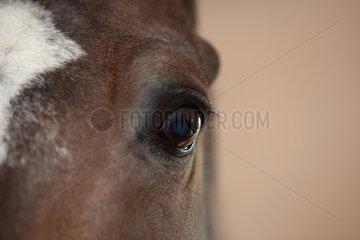 Kuchelmiss  Deutschland  Auge eines Pferdes