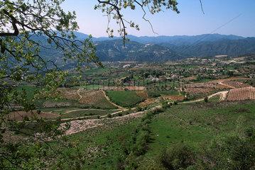 Republik Zypern - Baeume im Troodos-Gebirge