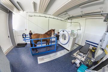 Pferd in einem Computertomographie Geraet