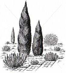 Garten Zierbaeume
