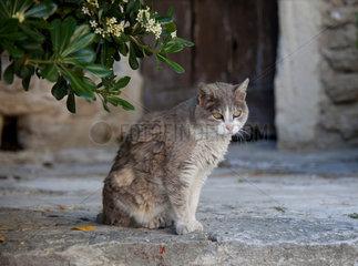 Bonnieux  Frankreich  eine Katze sitzt im Schatten