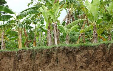 Leogane  Haiti  Abtraege auf Ackerflaechen durch Bodenerosion