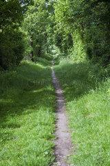 Wanderweg am Bistensee