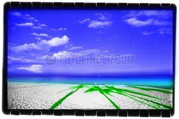 Strand mit Schattenpalmen