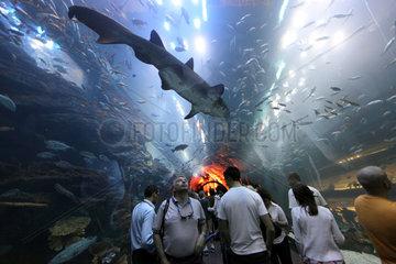 Dubai  Vereinigte Arabische Emirate  Besucher im Tunnel des Dubai Aquarium