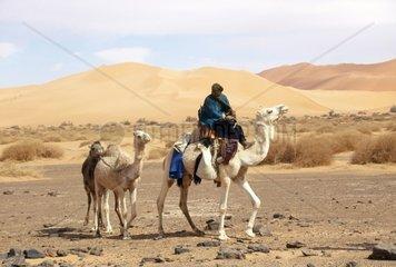 Algeria  the Sahara desert in West Grand Erg  Tuareg riding dromedary