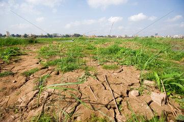 Phnom Penh  Kambodscha  vertrocknetes Feld