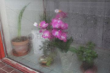 Budweis  Tschechien  Zimmerpflanzen hinter einer beschlagenen Fensterscheibe