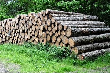 Mardorf  Deutschland  gestapelte Baumstaemme im Waldgebiet bei Mardorf