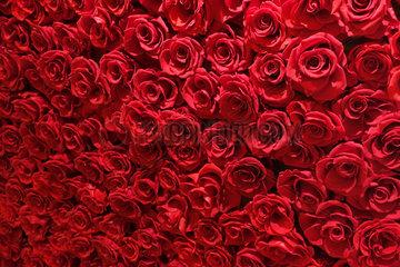 Berlin  Deutschland  rote Rosen