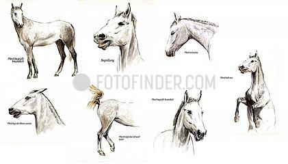 Pferdeverhalten