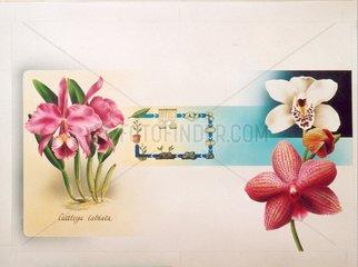 Zuechtung von Orchideen