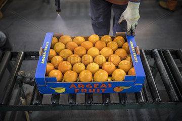 Haltbarmachung von Orangen in Griechenland