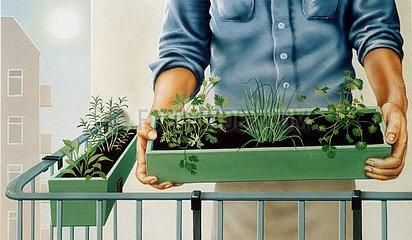 Kr?uter selber pflanzen
