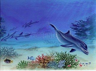 Junger Delphin