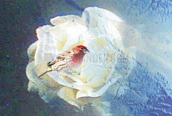 Blumenvogel