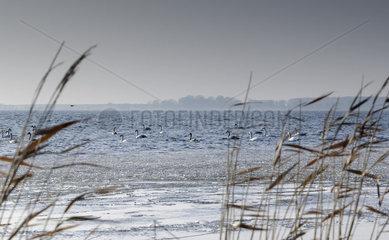 Landschaftsbild Insel Ruegen
