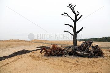 Nochten  Deutschland  Rekultivierungsflaeche WN 308 im Forstrevier Nochten-Vattenfall