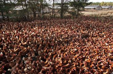 Produktionsstaette fuer Eier von freilaufenden Huehnern in Bodenhaltung