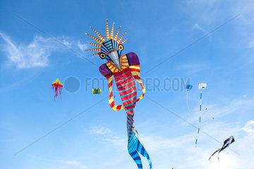 Potsdam  Deutschland  Drachenfest  ein selbstgebauter Drachen
