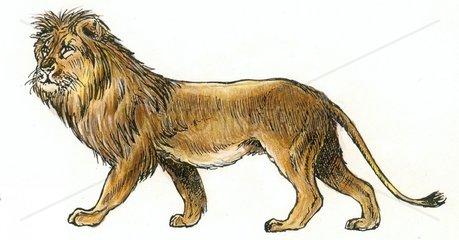 Loewe Serie Raubkatzen