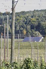 Hopfengarten und Solardaecher