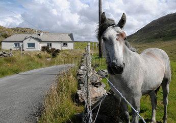 Pferdeweide an Irlands Westkueste