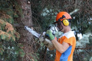 Magdeburg  Deutschland  Holzfaeller zerlegt einen Tannenbaum