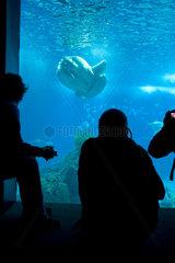 Aquariumbesucher mit Mondfisch