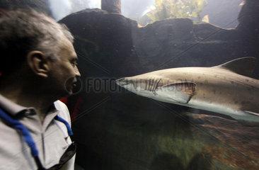 Dubai  Vereinigte Arabische Emirate  ein Mann betrachtet einen Hai im Dubai Aquarium